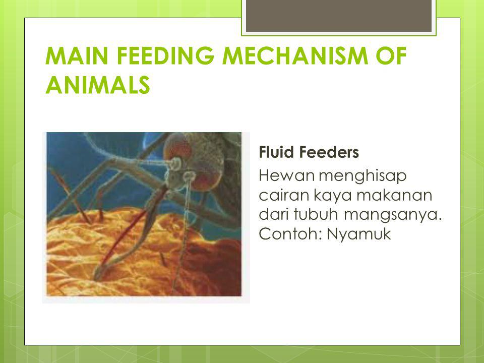MAIN FEEDING MECHANISM OF ANIMALS