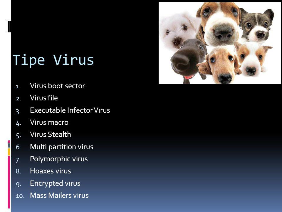 Tipe Virus Virus boot sector Virus file Executable Infector Virus