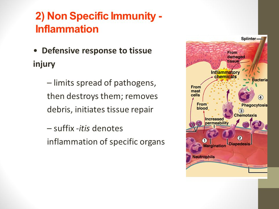 2) Non Specific Immunity - Inflammation