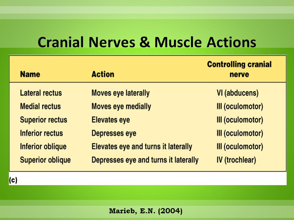 Cranial Nerves & Muscle Actions
