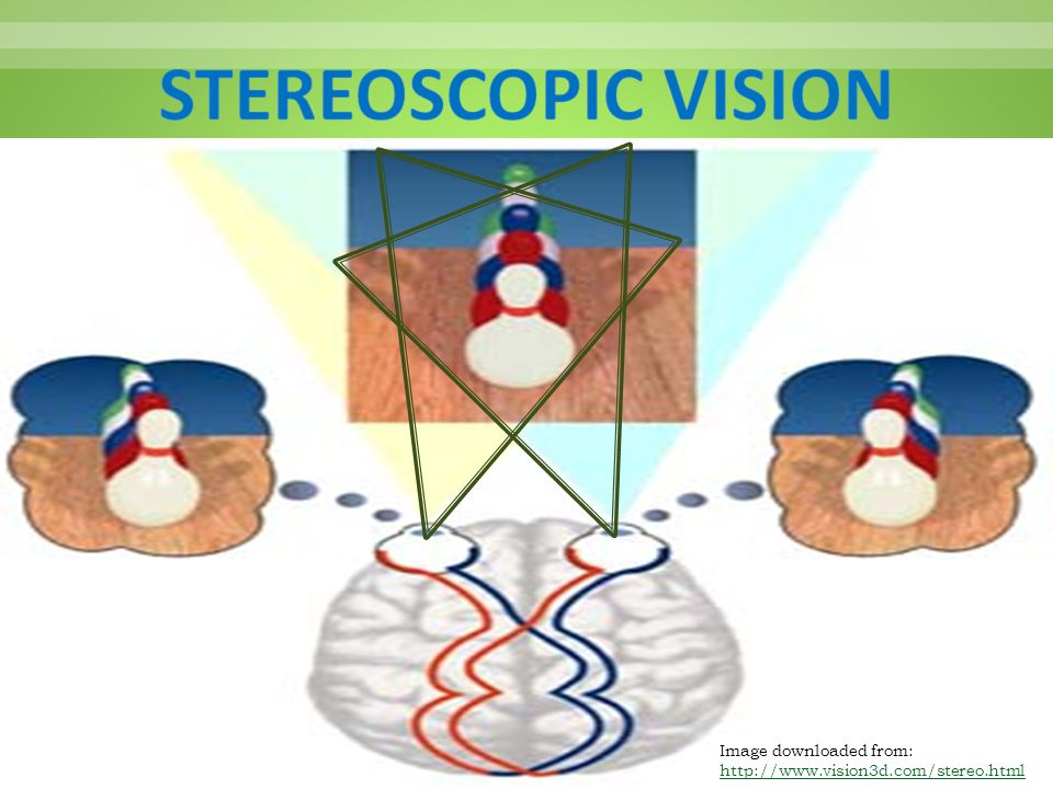 STEREOSCOPIC VISION Image downloaded from: http://www.vision3d.com/stereo.html