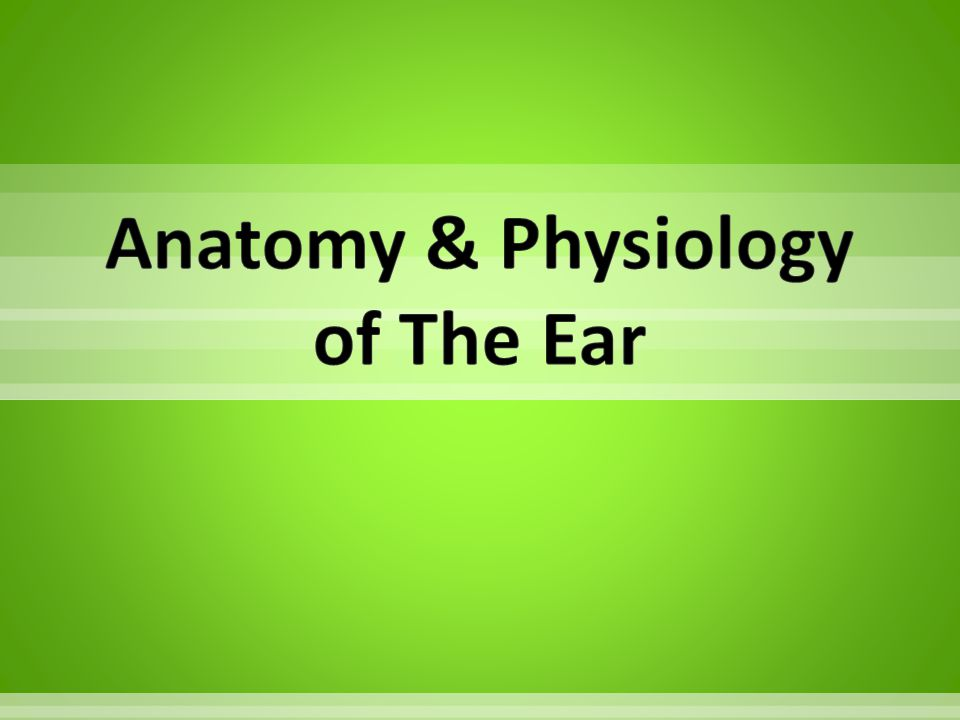 Anatomy & Physiology of The Ear
