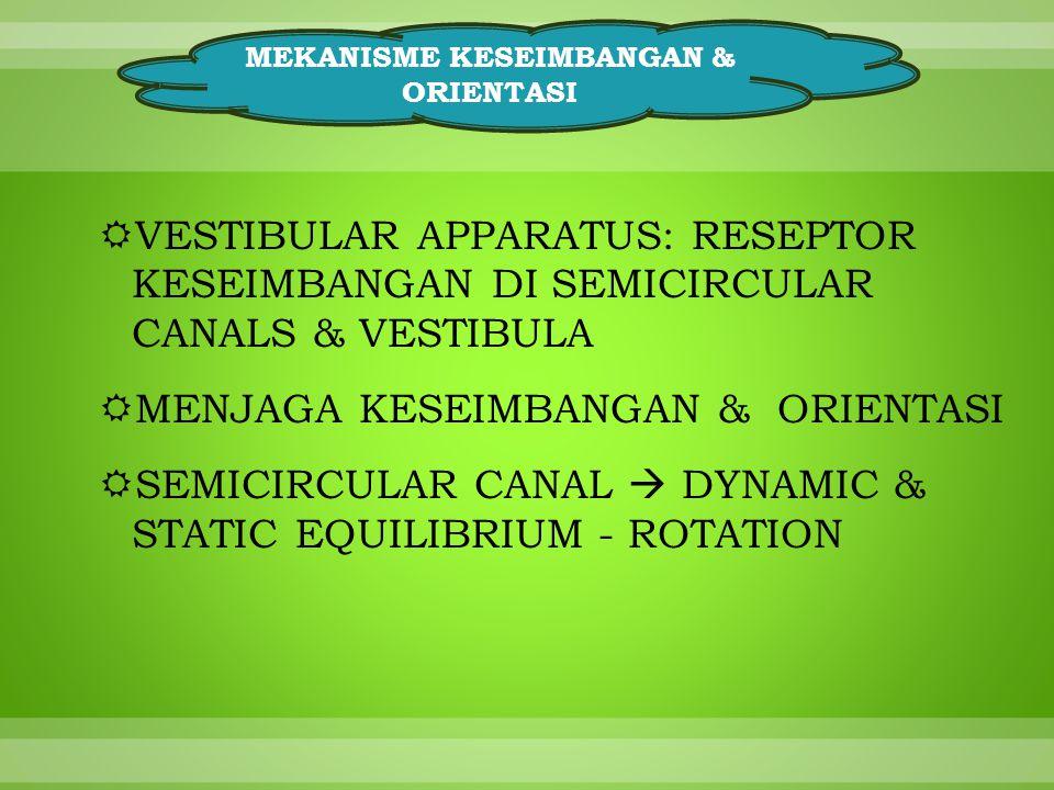 MEKANISME KESEIMBANGAN & ORIENTASI