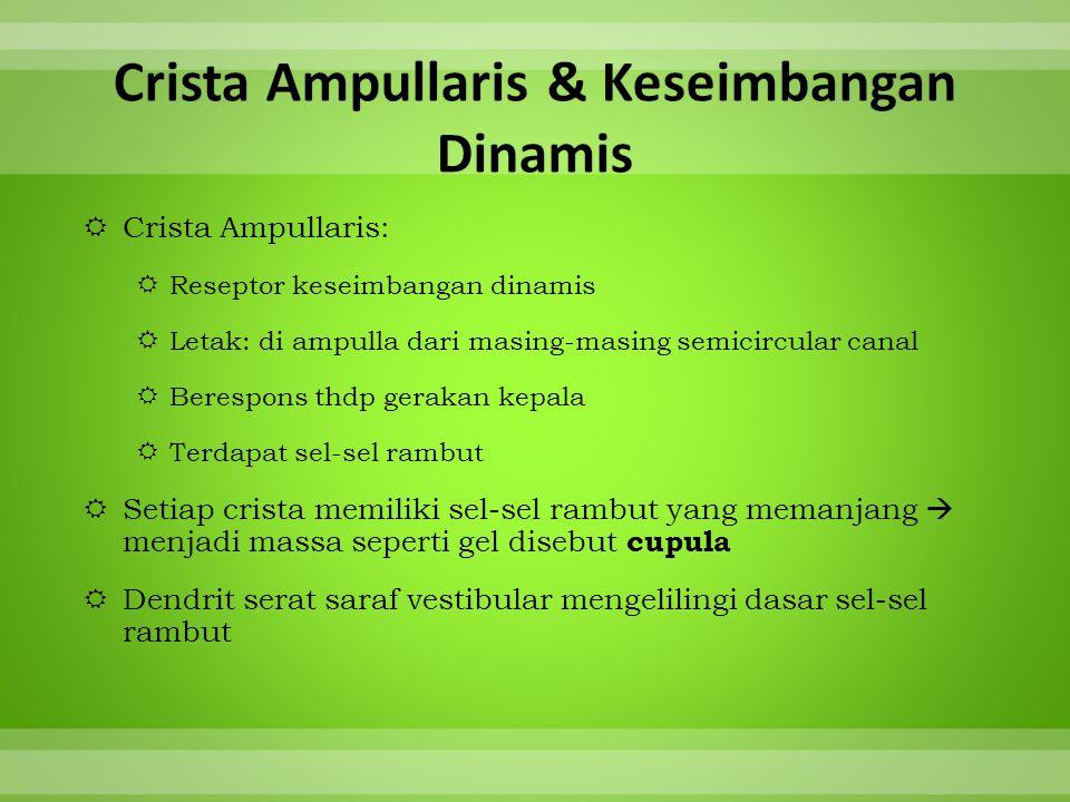 Crista Ampullaris & Keseimbangan Dinamis