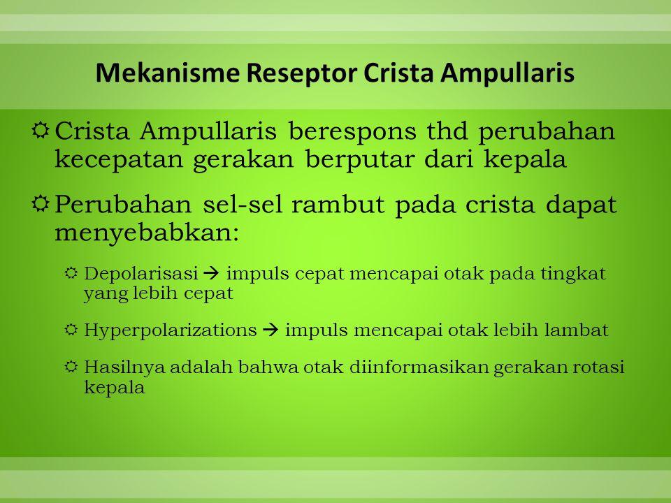 Mekanisme Reseptor Crista Ampullaris
