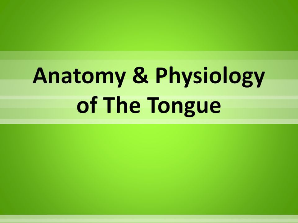 Anatomy & Physiology of The Tongue