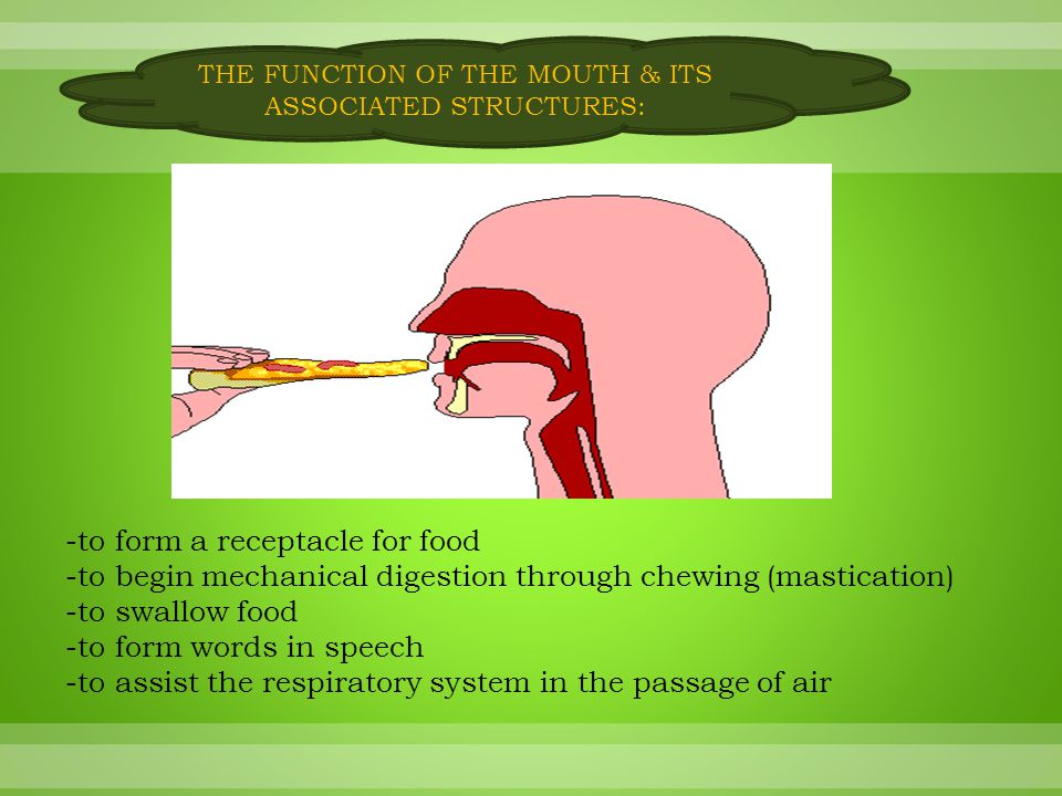 The function of the mouth & its associated structures: