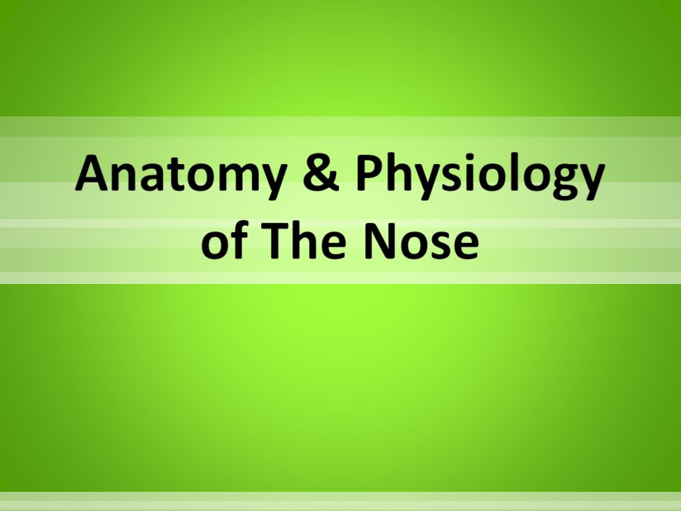 Anatomy & Physiology of The Nose
