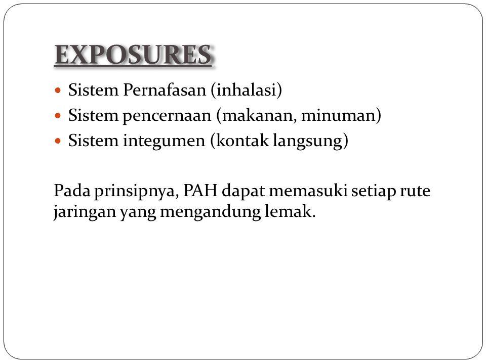 EXPOSURES Sistem Pernafasan (inhalasi)