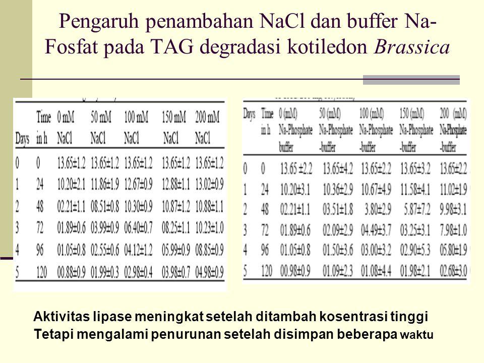 Pengaruh penambahan NaCl dan buffer Na-Fosfat pada TAG degradasi kotiledon Brassica