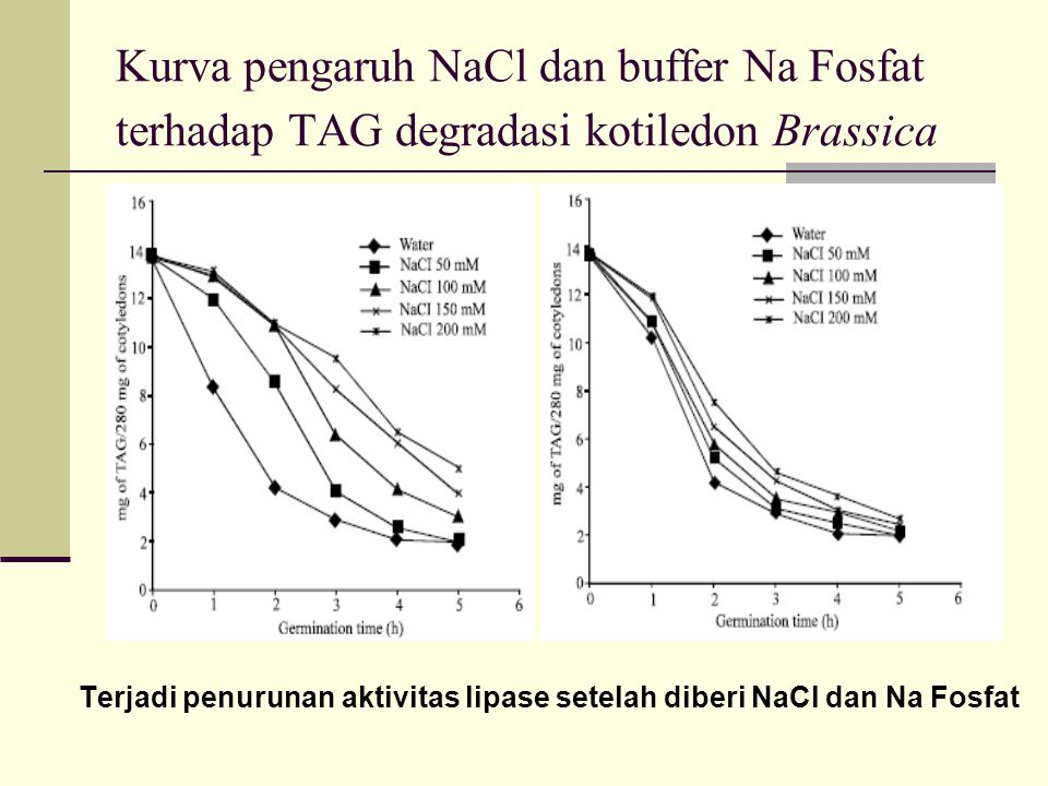 Kurva pengaruh NaCl dan buffer Na Fosfat terhadap TAG degradasi kotiledon Brassica