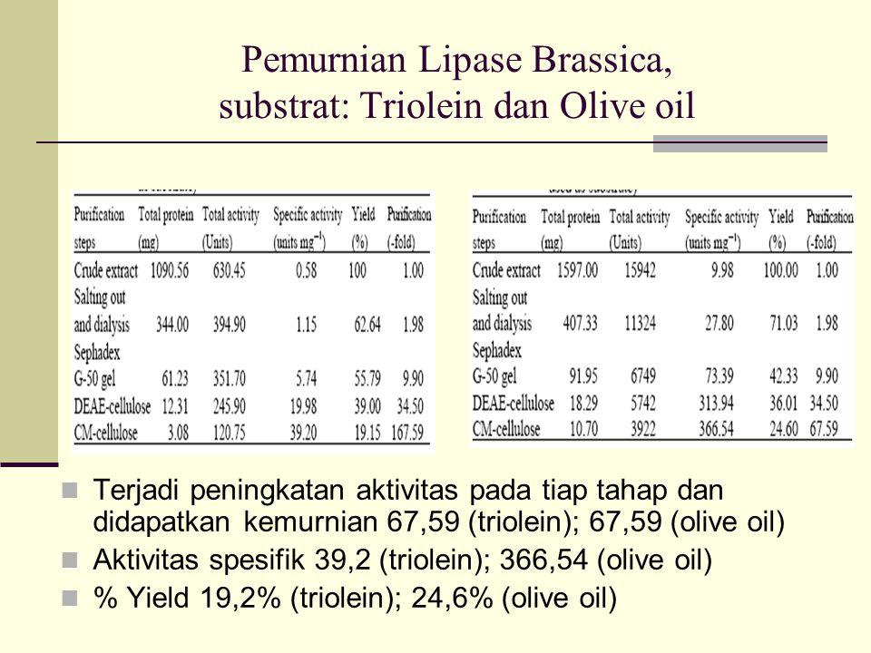 Pemurnian Lipase Brassica, substrat: Triolein dan Olive oil