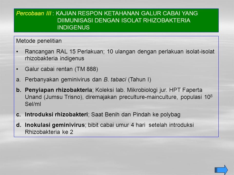 Percobaan III : KAJIAN RESPON KETAHANAN GALUR CABAI YANG DIIMUNISASI DENGAN ISOLAT RHIZOBAKTERIA INDIGENUS