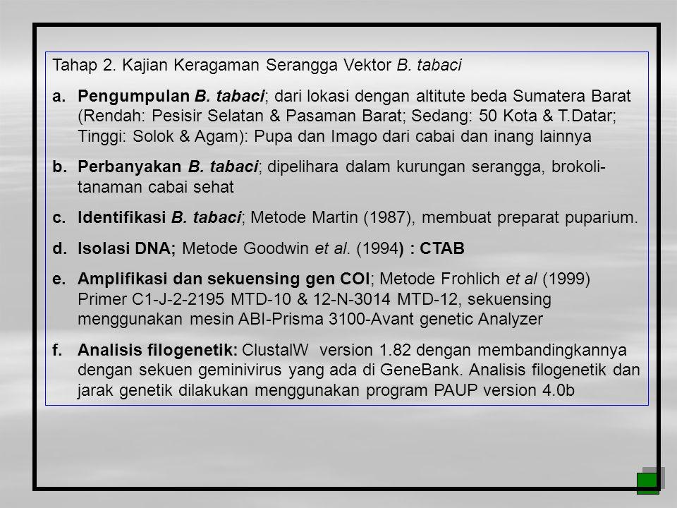 Tahap 2. Kajian Keragaman Serangga Vektor B. tabaci