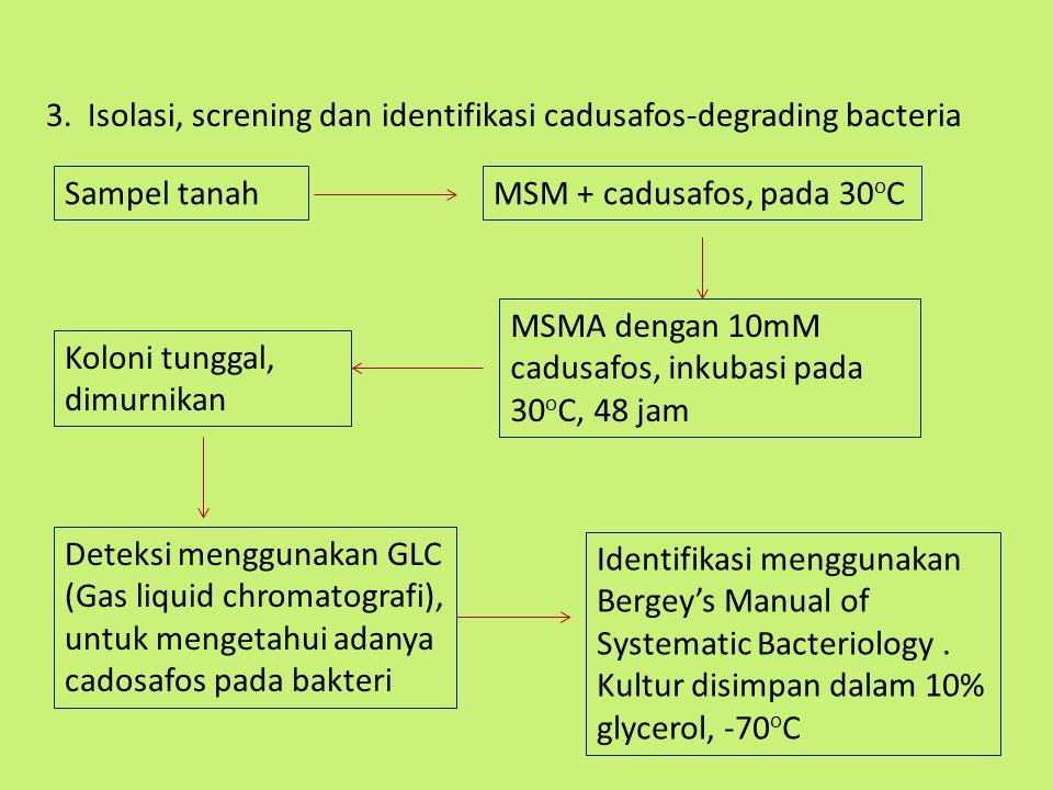 3. Isolasi, screning dan identifikasi cadusafos-degrading bacteria