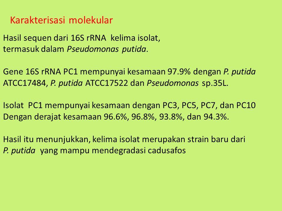 Karakterisasi molekular