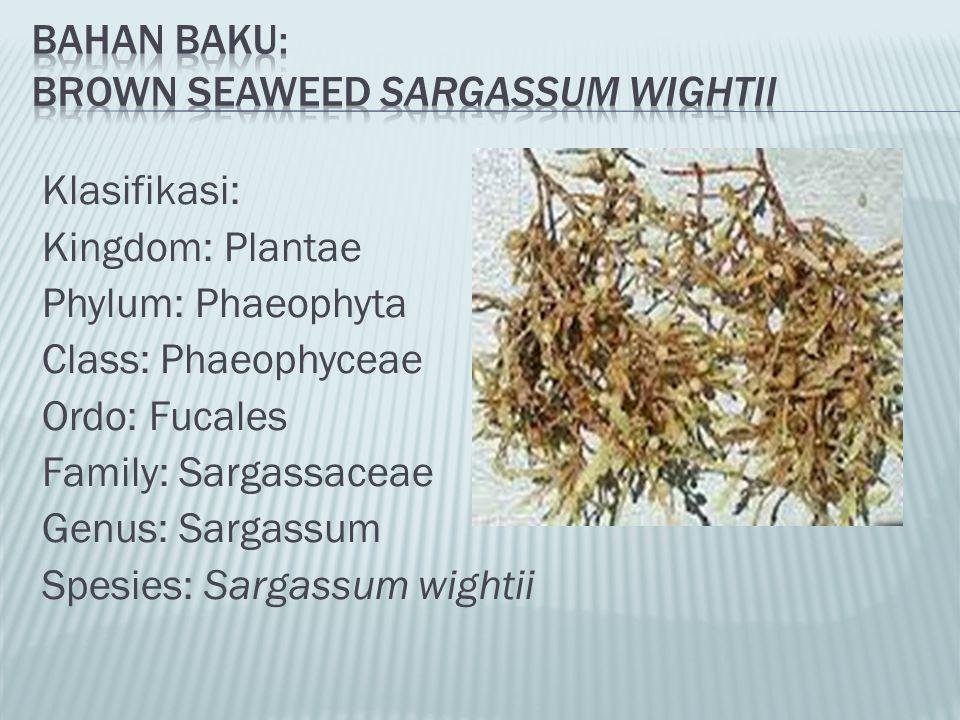Bahan Baku: Brown Seaweed Sargassum wightii
