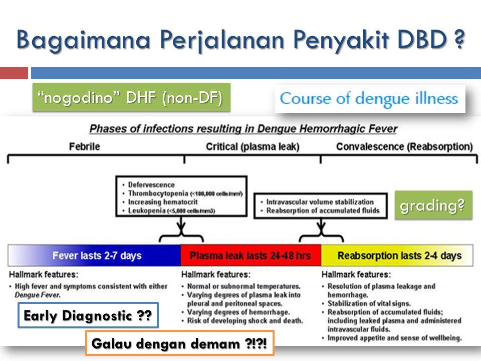 Bagaimana Perjalanan Penyakit DBD