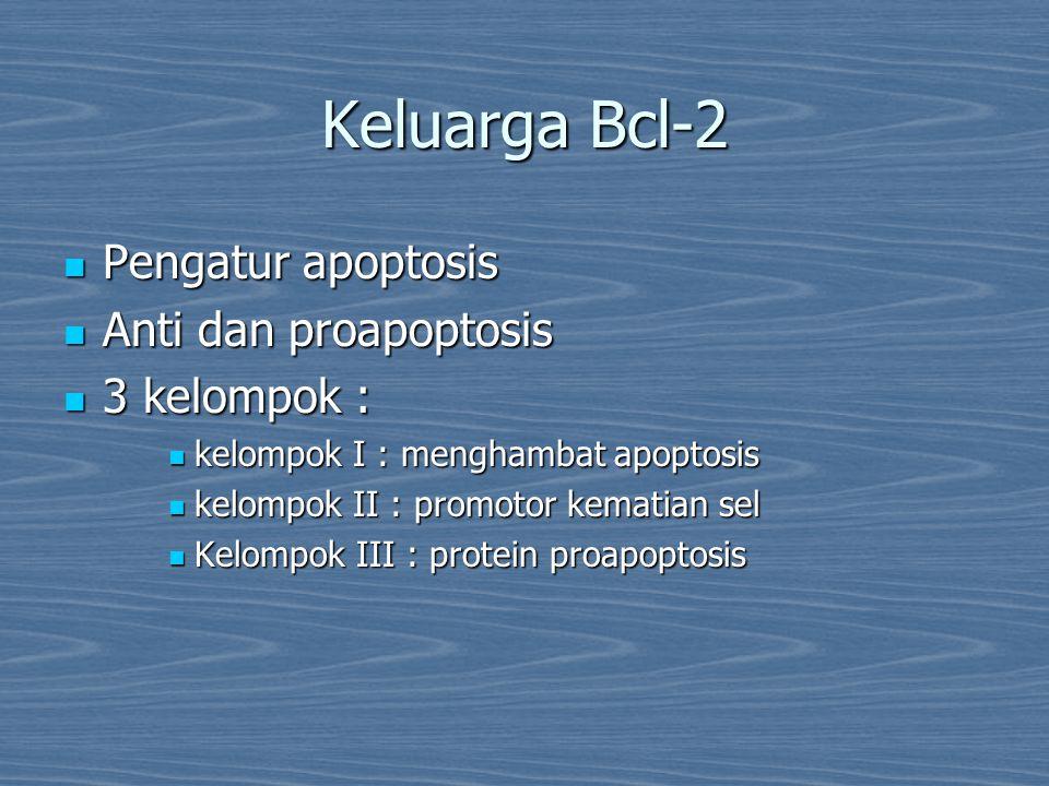 Keluarga Bcl-2 Pengatur apoptosis Anti dan proapoptosis 3 kelompok :