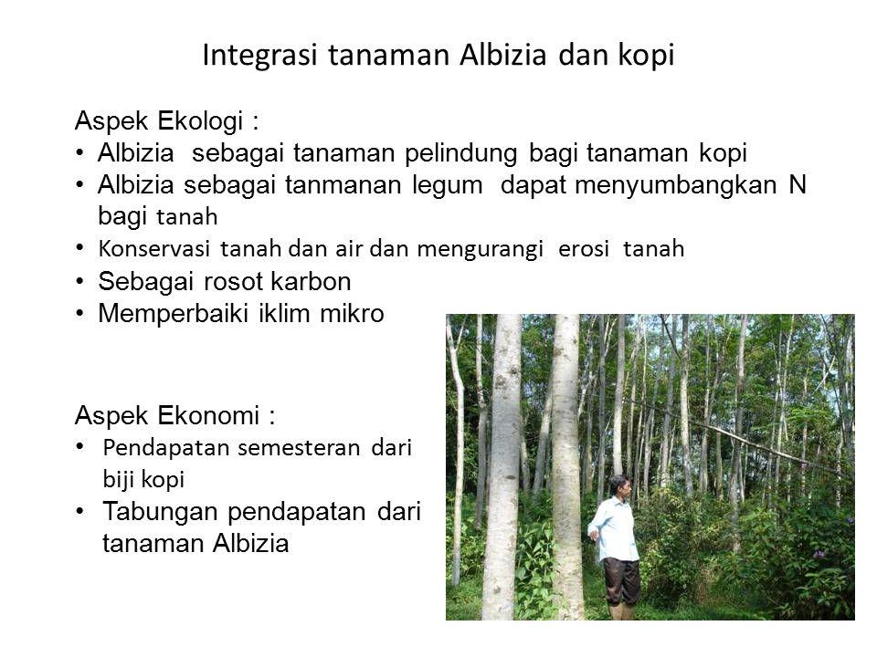Integrasi tanaman Albizia dan kopi