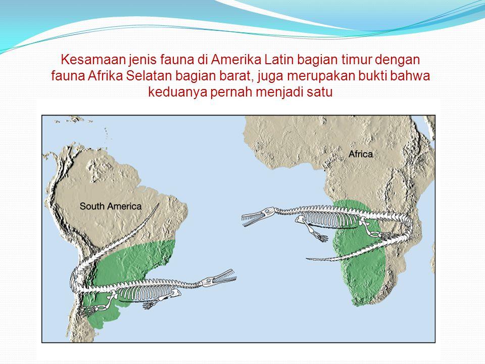 Kesamaan jenis fauna di Amerika Latin bagian timur dengan fauna Afrika Selatan bagian barat, juga merupakan bukti bahwa keduanya pernah menjadi satu