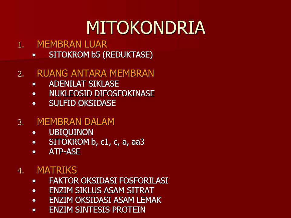 MITOKONDRIA MEMBRAN LUAR RUANG ANTARA MEMBRAN MEMBRAN DALAM MATRIKS