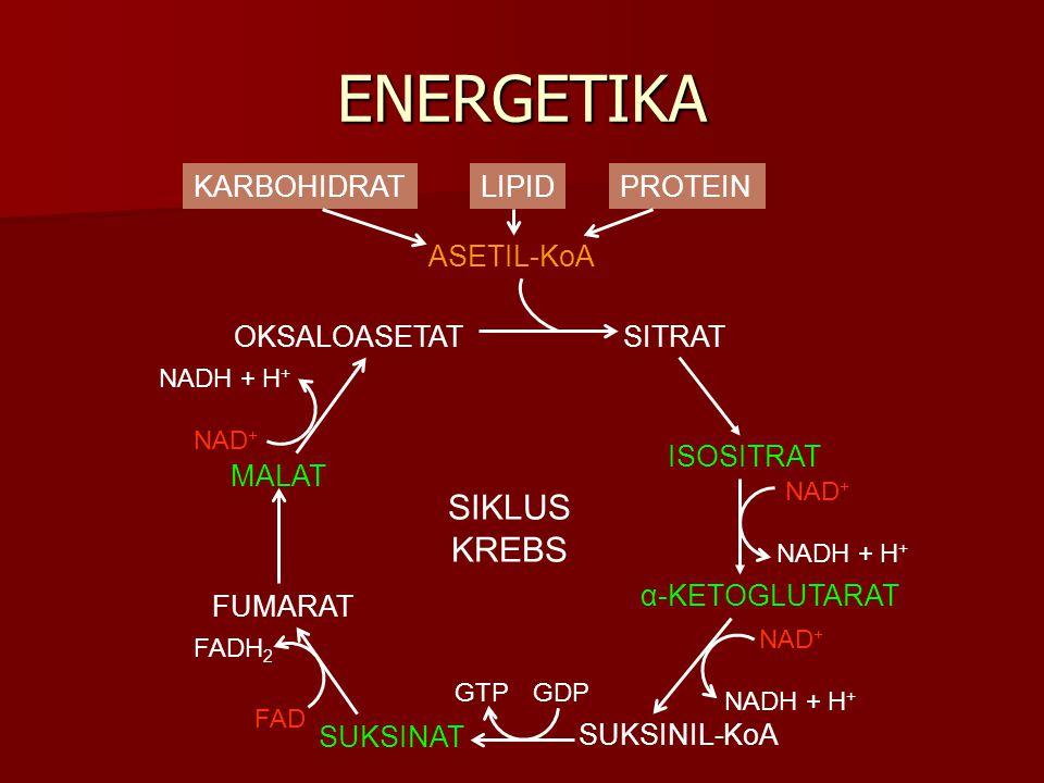 ENERGETIKA SIKLUS KREBS KARBOHIDRAT LIPID PROTEIN ASETIL-KoA