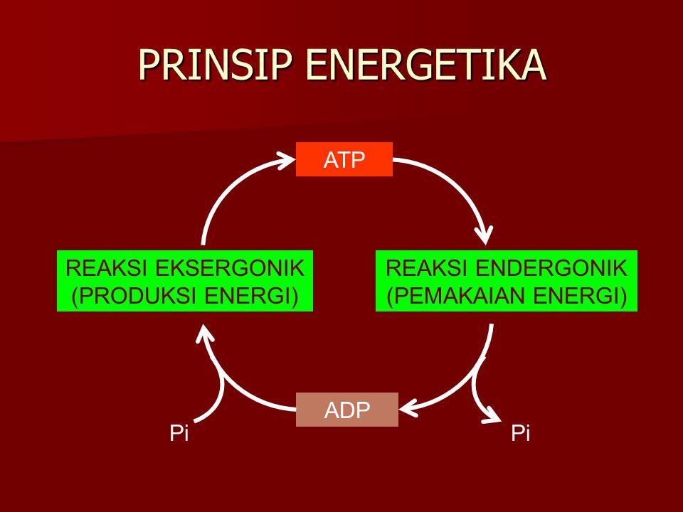 PRINSIP ENERGETIKA ATP REAKSI EKSERGONIK (PRODUKSI ENERGI)
