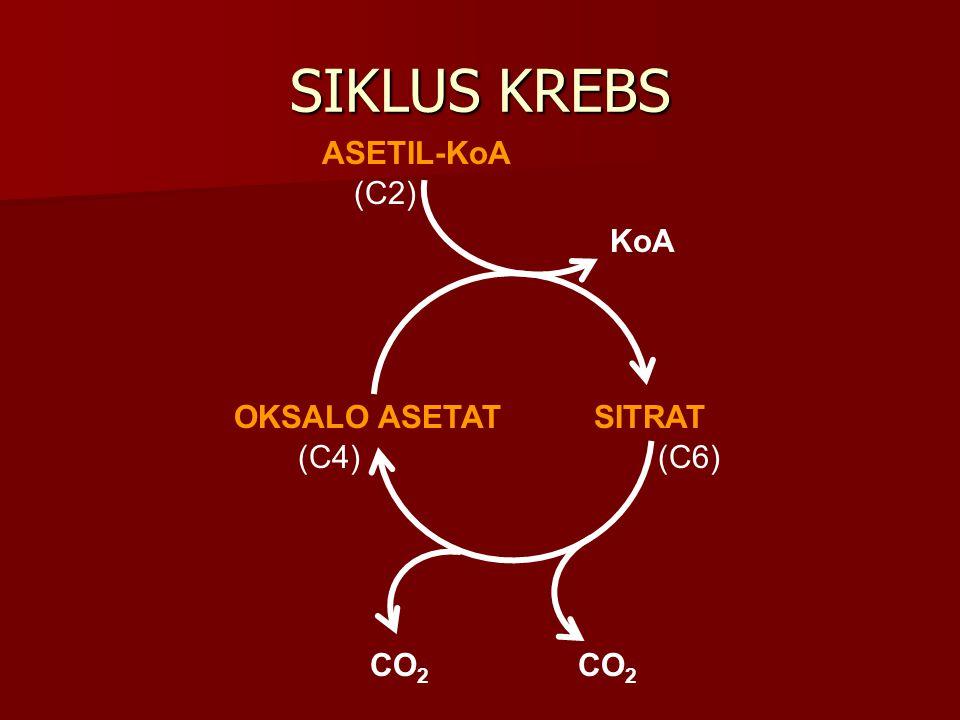 SIKLUS KREBS OKSALO ASETAT SITRAT ASETIL-KoA KoA CO2 (C4) (C6) (C2)