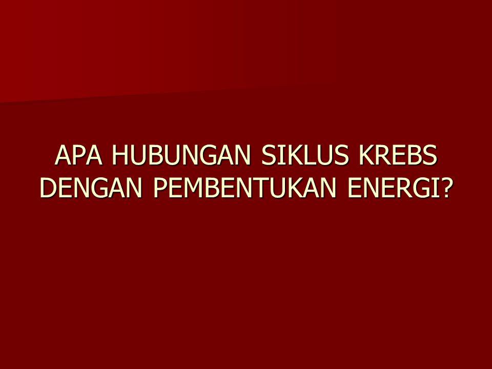 APA HUBUNGAN SIKLUS KREBS DENGAN PEMBENTUKAN ENERGI