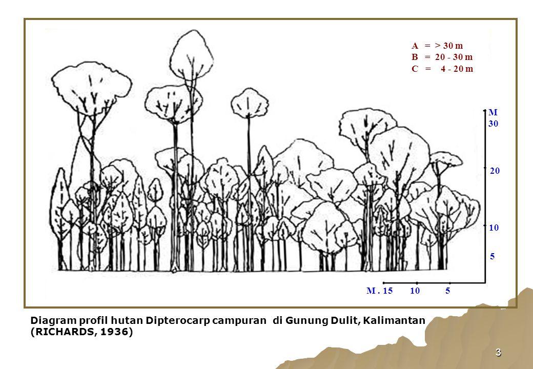 M 30. 5. 10. M . 15. 20. Diagram profil hutan Dipterocarp campuran di Gunung Dulit, Kalimantan (RICHARDS, 1936)