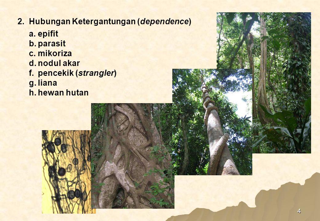 a. epifit b. parasit. c. mikoriza. d. nodul akar. f. pencekik (strangler) g. liana. h. hewan hutan.