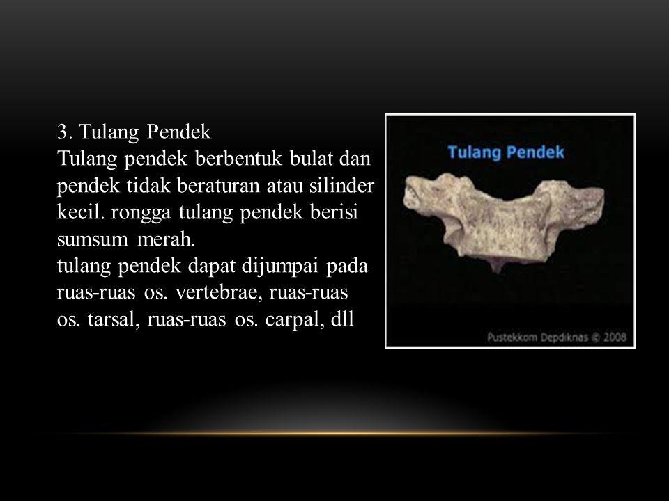 3. Tulang Pendek
