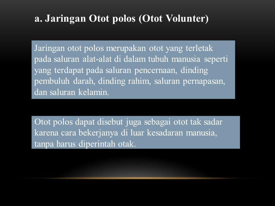 a. Jaringan Otot polos (Otot Volunter)