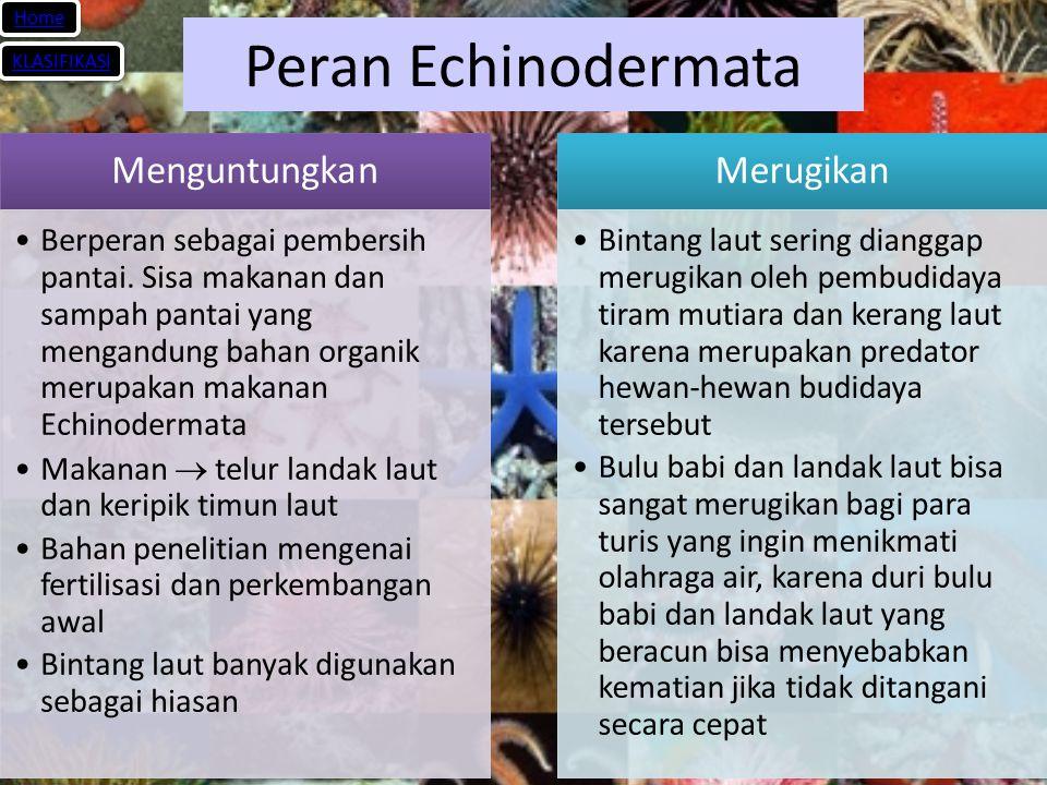 Peran Echinodermata Menguntungkan Merugikan Home KLASIFIKASI