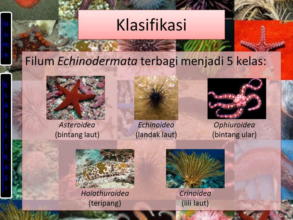 Klasifikasi Filum Echinodermata terbagi menjadi 5 kelas: Asteroidea