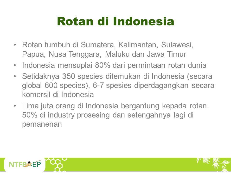 Rotan di Indonesia Rotan tumbuh di Sumatera, Kalimantan, Sulawesi, Papua, Nusa Tenggara, Maluku dan Jawa Timur.
