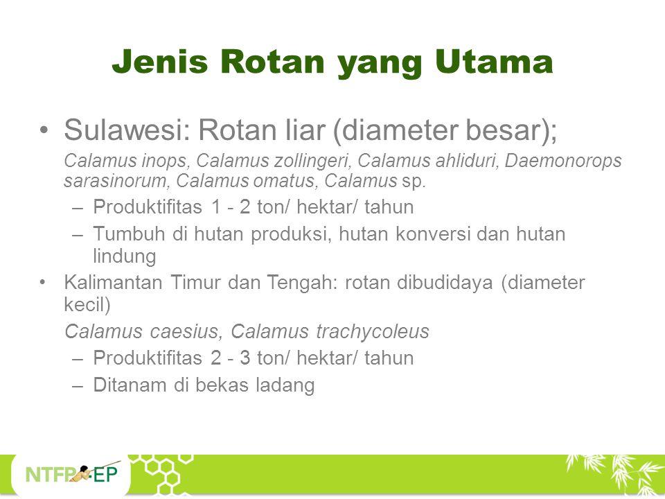 Jenis Rotan yang Utama Sulawesi: Rotan liar (diameter besar);
