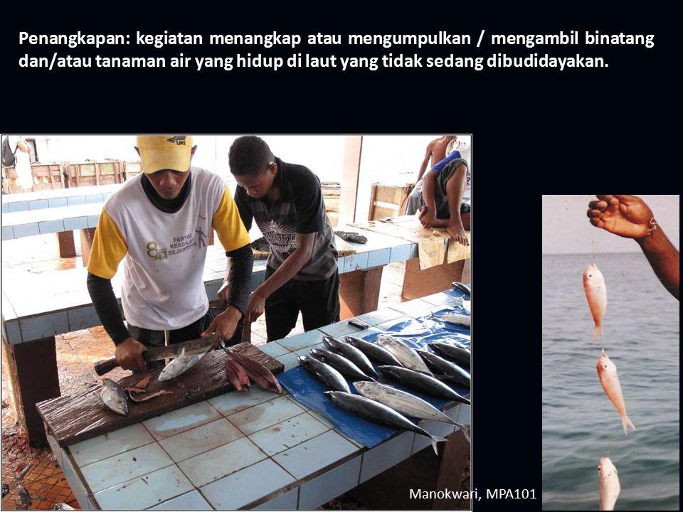 Penangkapan: kegiatan menangkap atau mengumpulkan / mengambil binatang dan/atau tanaman air yang hidup di laut yang tidak sedang dibudidayakan.