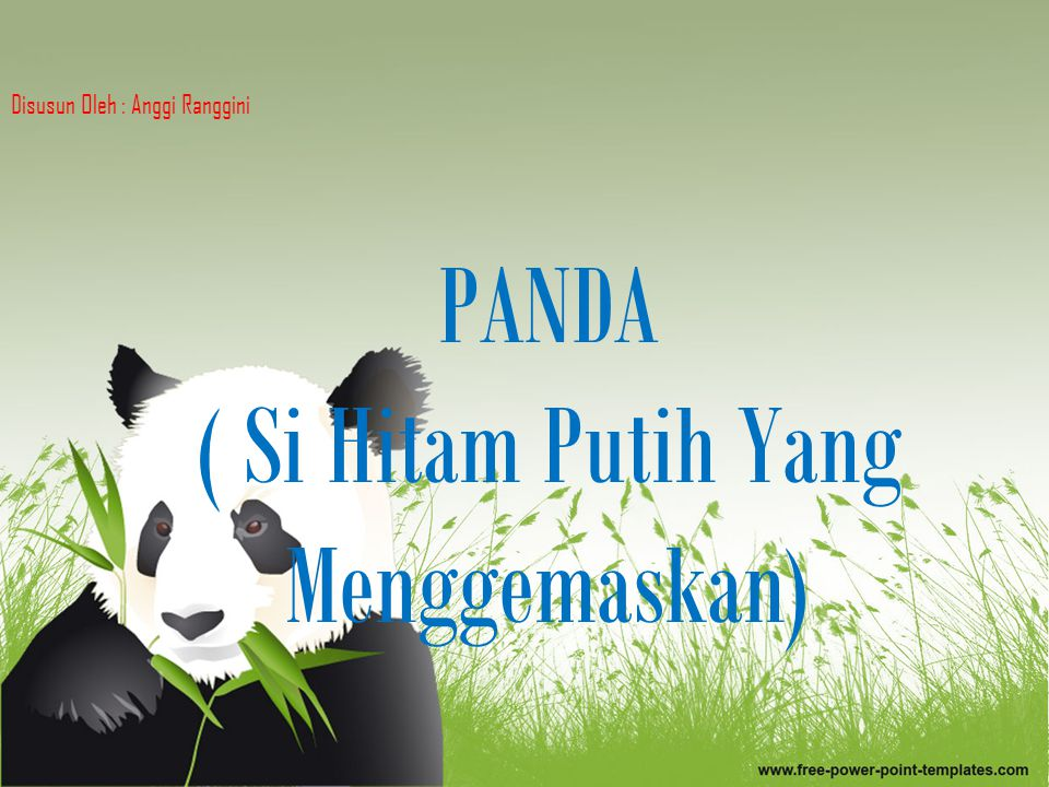 PANDA ( Si Hitam Putih Yang Menggemaskan)