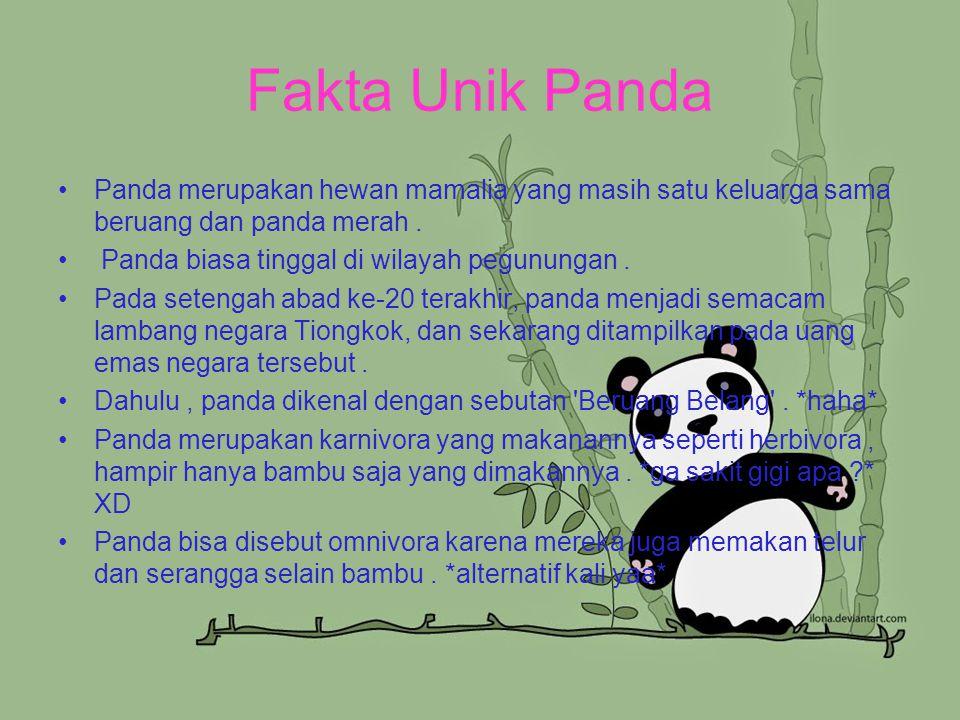 Fakta Unik Panda Panda merupakan hewan mamalia yang masih satu keluarga sama beruang dan panda merah .