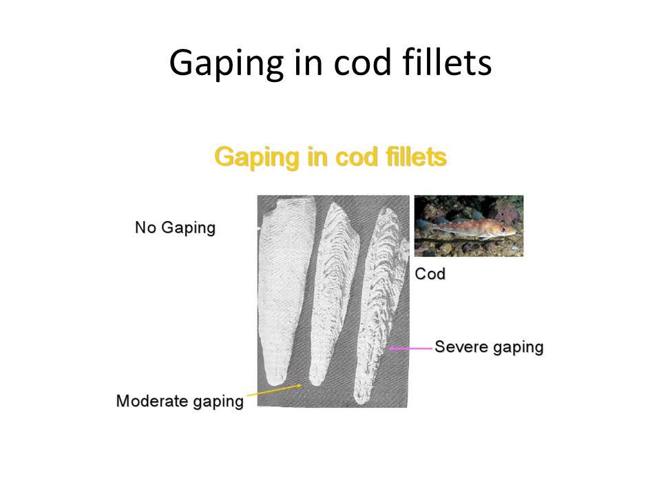 Gaping in cod fillets