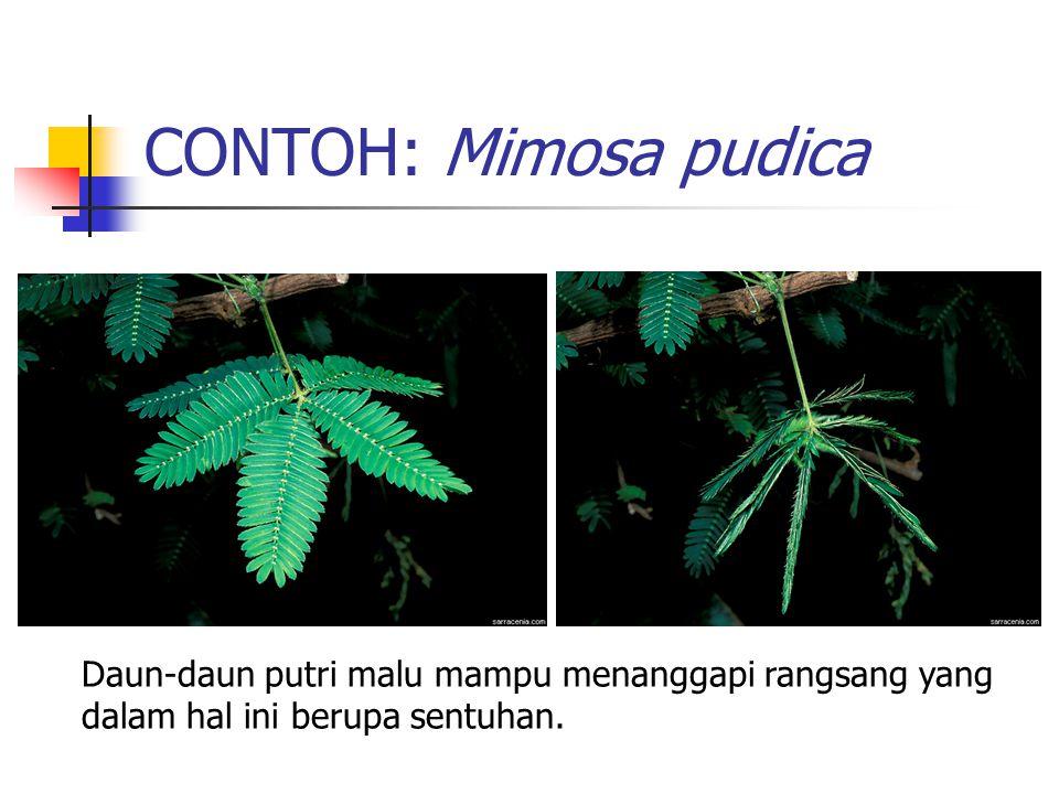 CONTOH: Mimosa pudica Daun-daun putri malu mampu menanggapi rangsang yang dalam hal ini berupa sentuhan.