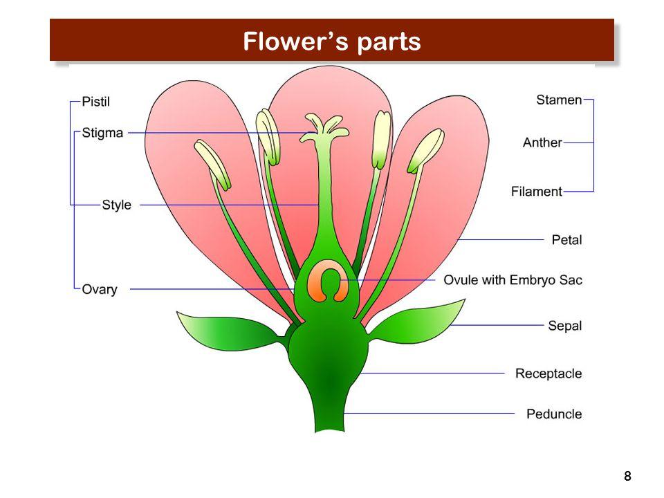 Flower's parts