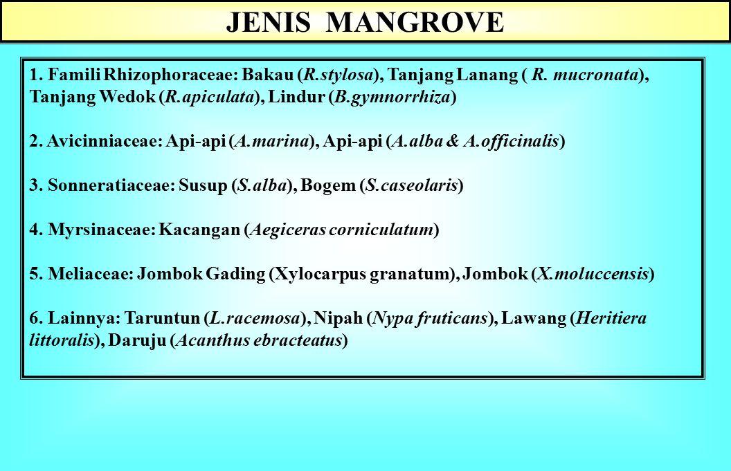 JENIS MANGROVE 1. Famili Rhizophoraceae: Bakau (R.stylosa), Tanjang Lanang ( R. mucronata), Tanjang Wedok (R.apiculata), Lindur (B.gymnorrhiza)