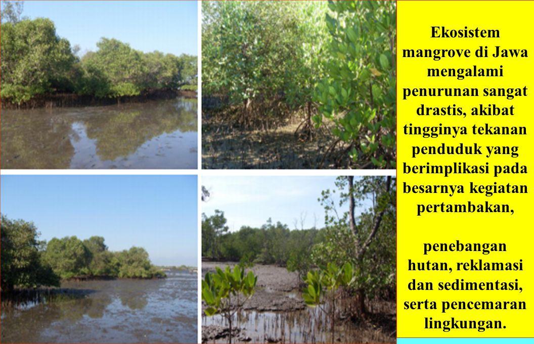 Ekosistem mangrove di Jawa mengalami penurunan sangat drastis, akibat tingginya tekanan penduduk yang berimplikasi pada besarnya kegiatan pertambakan,