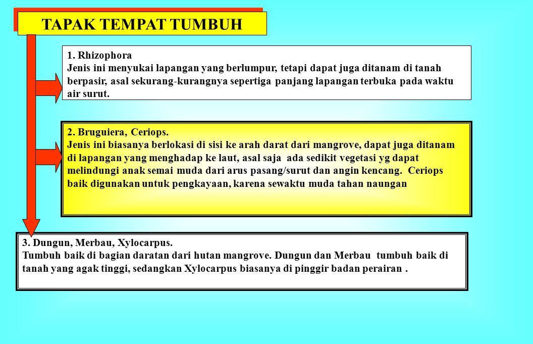 TAPAK TEMPAT TUMBUH 1. Rhizophora