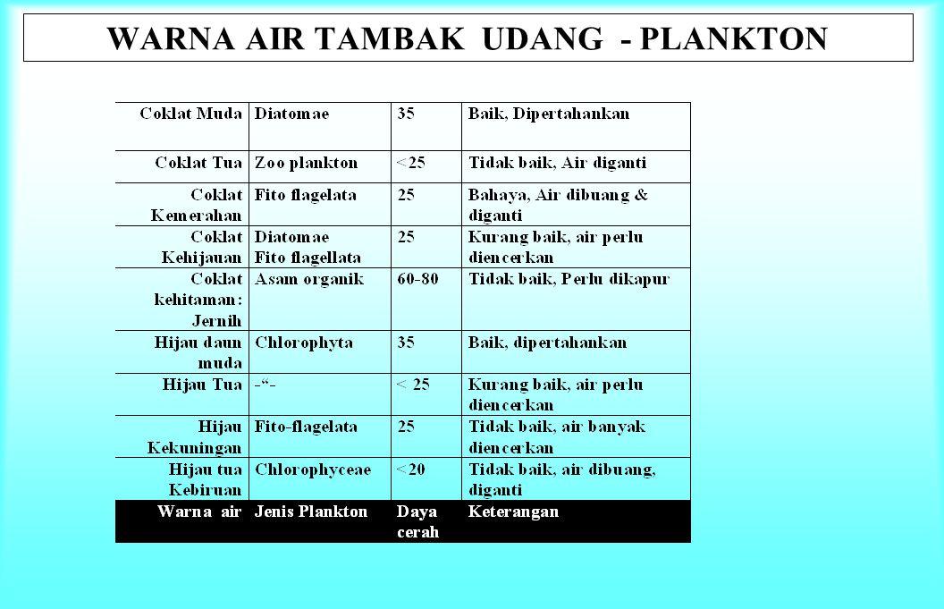WARNA AIR TAMBAK UDANG - PLANKTON
