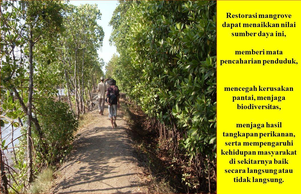 Restorasi mangrove dapat menaikkan nilai sumber daya ini,