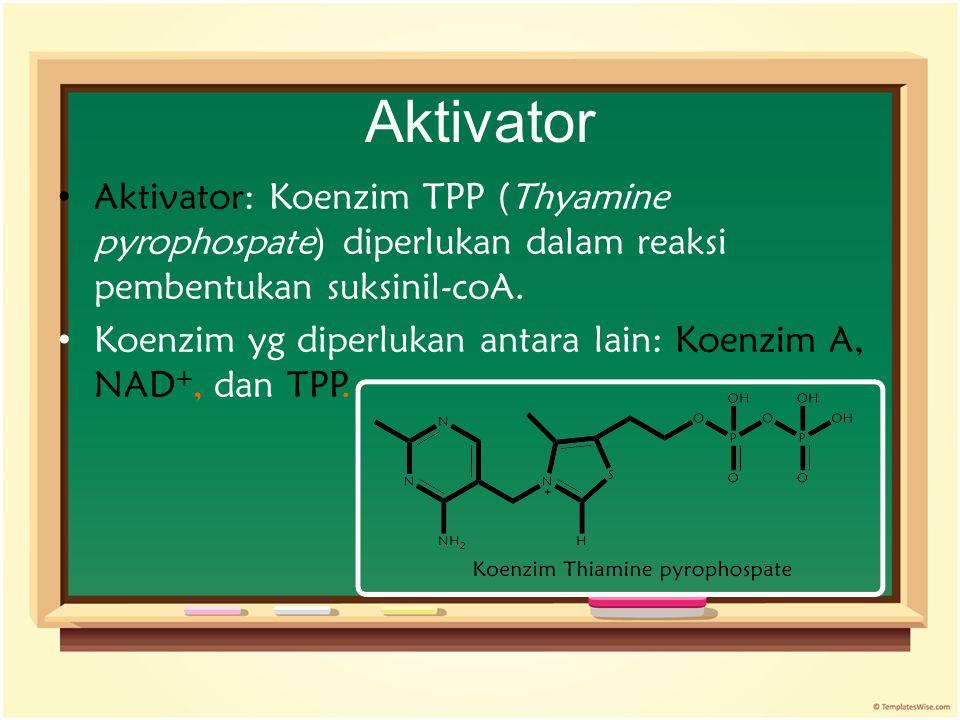 Aktivator Aktivator: Koenzim TPP (Thyamine pyrophospate) diperlukan dalam reaksi pembentukan suksinil-coA.
